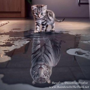 Kitty Tiger Reflection